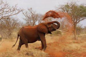 Dwanggedachten en de roze olifant