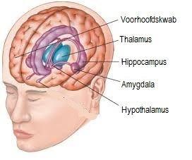 Psychopaat en hersenen
